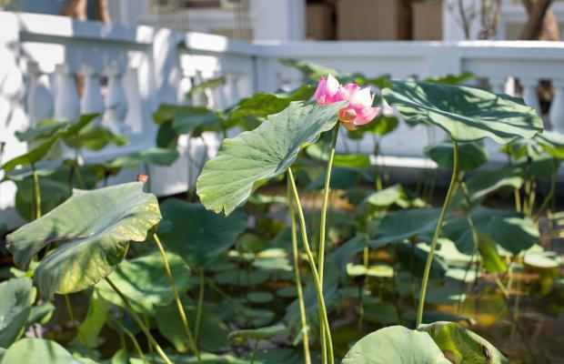 фотографии отеля Hoi An Garden Palace изображение №47