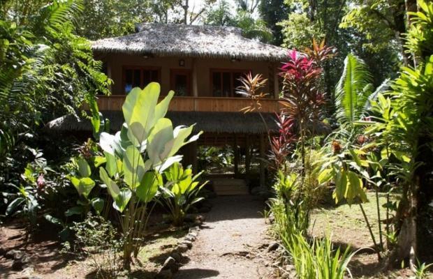 фотографии Copa De Arbol Beach & Rainforest Resort изображение №16