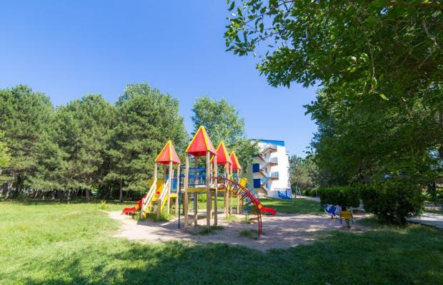 фото Черноморская зорька (Chernomorskaya zorka) изображение №2