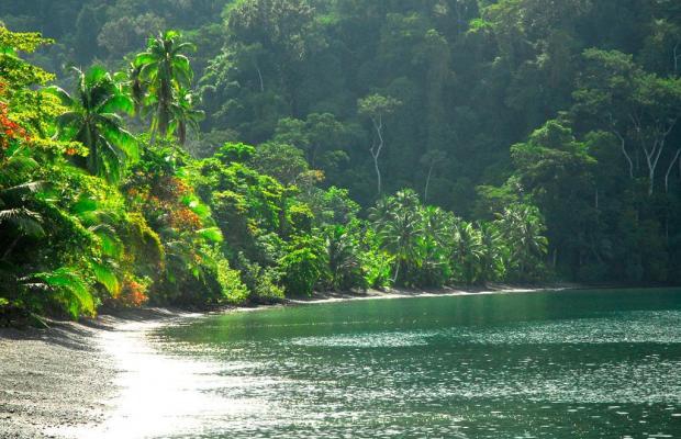 фотографии отеля Playa Nicuesa Rainforest Lodge изображение №27