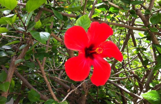 фото отеля Flower Villa Apart изображение №5