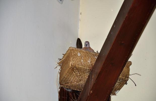 фото отеля Eski Masal Hotel (ex. Puding Suite) изображение №45
