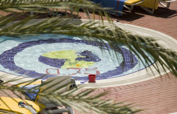 фотографии Palm D'or изображение №12