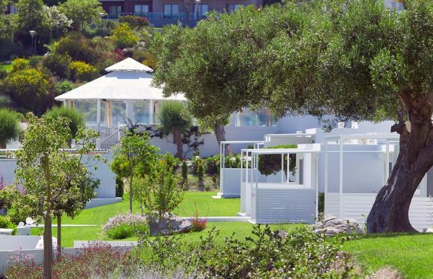 фотографии Dimitra Beach Resort изображение №48