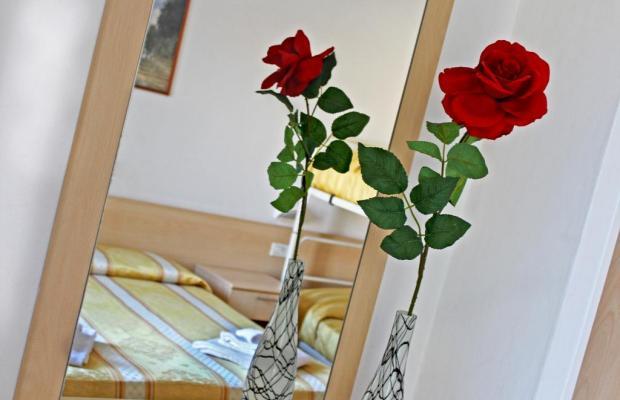 фото New Primula изображение №18
