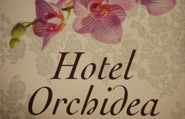 фото Orchidea  изображение №10