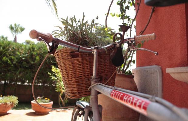 фото Es Baulo Petit изображение №6