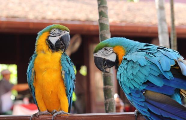 фото Sugar Hut Resort изображение №2