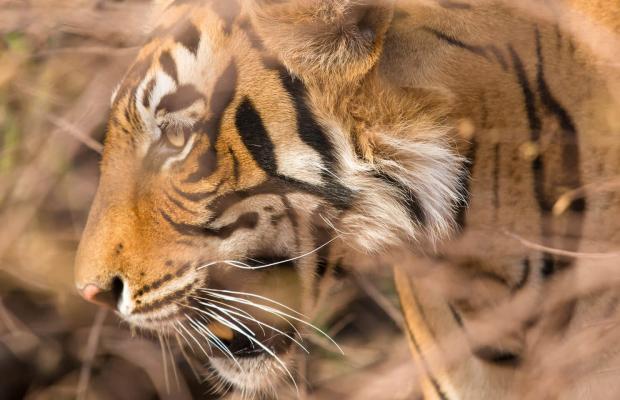 фотографии отеля  The Oberoi Vanyavilas Ranthambhore изображение №3