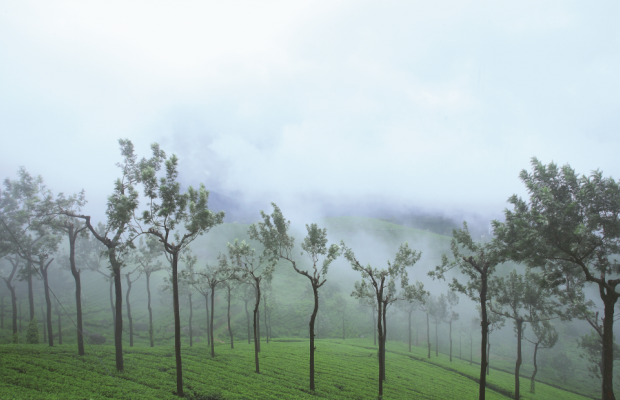 фото Misty Mountain Resort изображение №10
