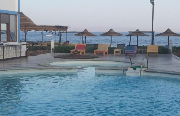 фотографии отеля Seaview Hotel Dahab изображение №3