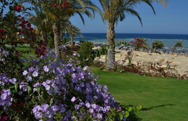 фото Fantazia Resort Marsa Alam (ex.Shores Fantazia Resort Marsa Alam) изображение №18