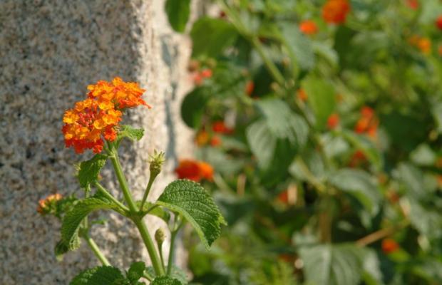 фото Quinta do Vale do Monte изображение №2